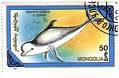 dolfijn-3_bewerkt-1.jpg