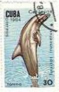 dolfijn-9_bewerkt-1.jpg