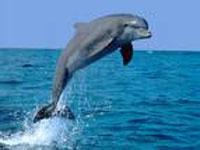 dolfijn-echt_bewerkt-1.jpg