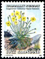 kruipende-klaproos-1000-ore-862-195p.jpg