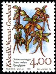 orchidee-4-kr-875-195p.jpg