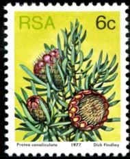6-c-1977-092.jpg