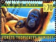 1-postzegel-orang-oetan-verenigde-naties-geneve-1998