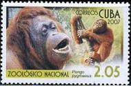 8-postzegel-orang-oetan-cuba-2007