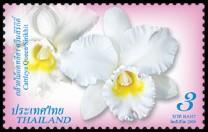 thailand_bloem_orchidee_1