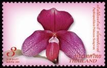 thailand_bloem_orchidee_2