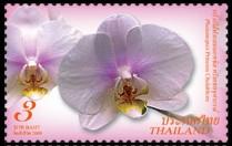 thailand_bloem_orchidee_4