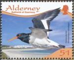 wader-birds-alderney