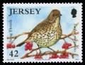 song-bird-42