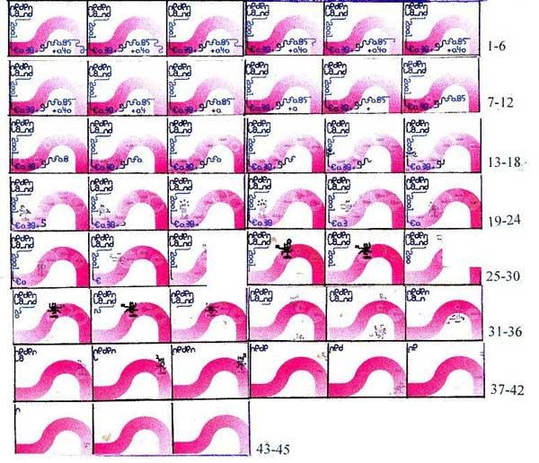 kind-2001-paarse-rivier