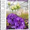 Lisianthus-postzegel-westlands-mooiste