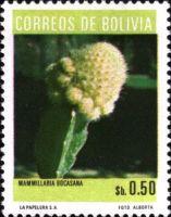 Mammillaria bocasana Bolivia