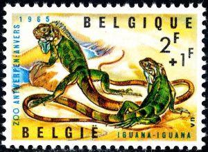 belgie-1345