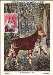maxikaart-okapi