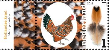 nederlandse-kippenrassen-hollands-kriel