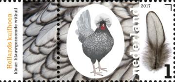 nederlandse-kippenrassen-hollands-kuifhoef