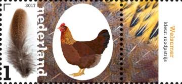 nederlandse-kippenrassen-welsumer
