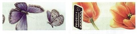 vlinder-tulp