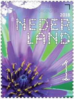 Beleef de natuur - veldbloemen - paarse morgenster