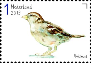 Tuinvogels in Nederland - Huismus