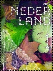 Beleef de natuur - bomen & bladeren - 7