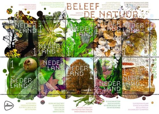 Beleef de natuur - bomen & bladeren