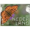 Beleef de Natuur - Duin en Kruidberg - duinparelmoervlinder
